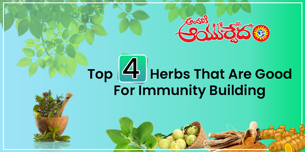 Top 4 Herbs that are good for Immunity Building